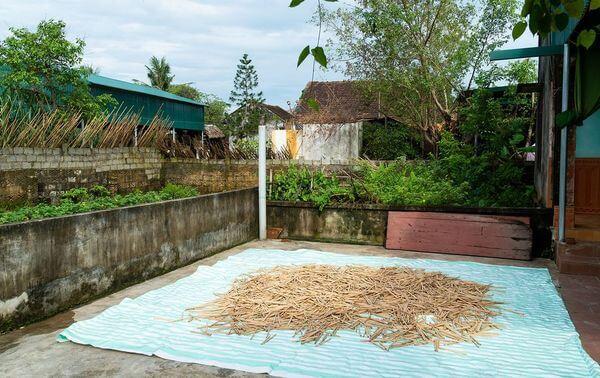 Séchage paille en bambou
